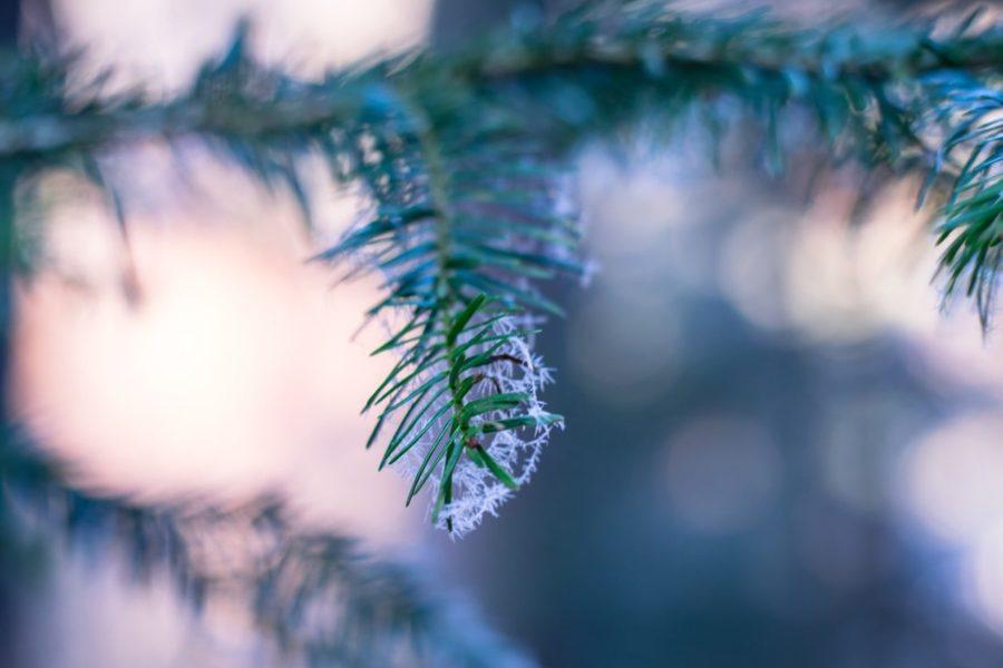 blur-branch-christmas-284712